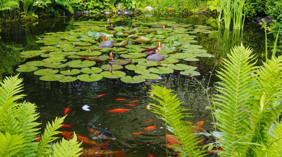 Filtracija-ribnikov